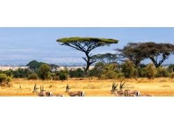 非洲草原动物