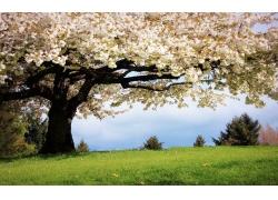 旅游景区大树与草地