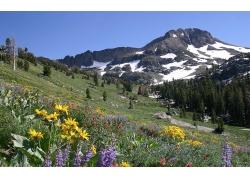 冬季雪山与草地