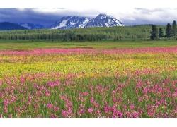 雪山下的山峰与草地
