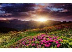 夕阳下的山坡与鲜花