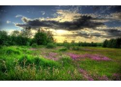天空下的草地与鲜花