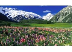 雪山下的草原