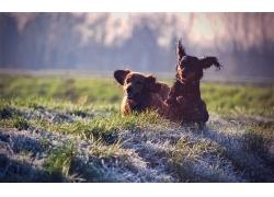 草地上奔跑的狗
