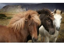 草地上的马