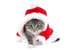 过圣诞节的小猫