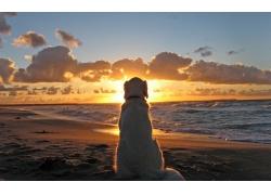 夕阳下的沙滩与宠物