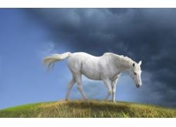 草地上的白马