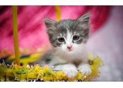 花篮里的小猫