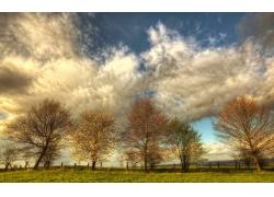 秋天草地树木风景