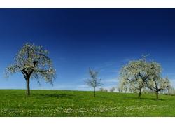 春天草地树木