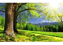 春天树木草地风景