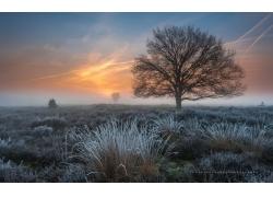 冬天草地树木风景