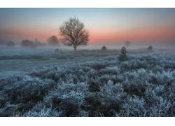 冬季草地小树雪景