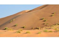 沙漠中的植物