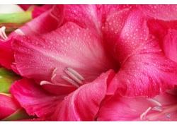 水仙花花蕊