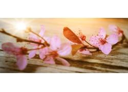 木板上的樱花