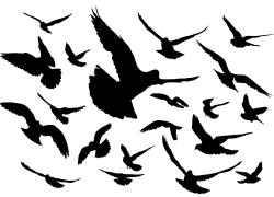 飞翔的鸽子剪影