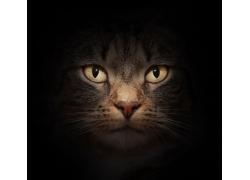 黑暗处的猫