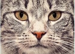 一只可爱的猫