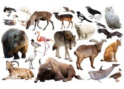 各种动物合集图片