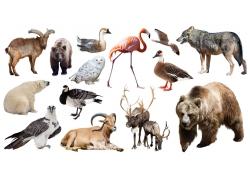 野生动物合集图片