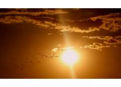 夕阳与飞翔的鸟