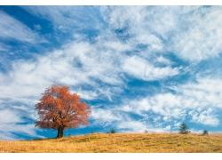 秋天草原树木风景