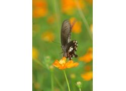 黄色花朵与蝴蝶