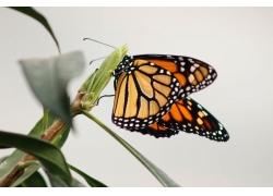 植物上的蝴蝶