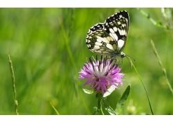 粉色花朵上的蝴蝶