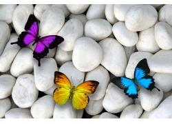 石头上的彩色蝴蝶