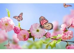 绿叶与粉色花朵