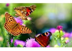 花朵里的蝴蝶