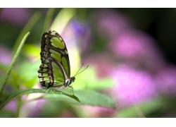 绿叶上的蝴蝶