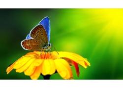阳光下的花朵与蝴蝶