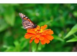 彩色花朵上的蝴蝶