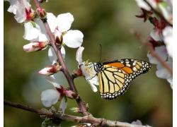 树枝上的蝴蝶
