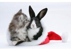 圣诞帽里的兔子
