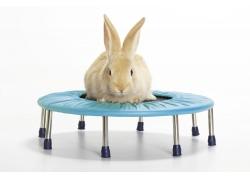 蹦蹦床上的兔子