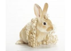 卷发与兔子