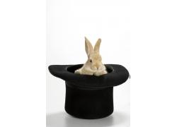 礼帽里的兔子