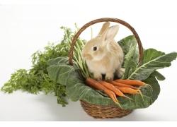 篮子里的蔬菜与兔子
