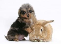 一条狗与兔子
