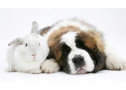 趴着的兔子与狗