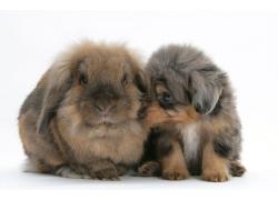 趴着的狗与兔子