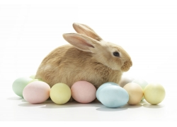 彩蛋与兔子