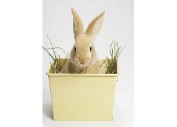 塑料箱里的兔子