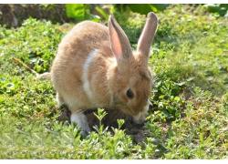 野草与兔子