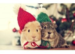 带着帽子的兔子